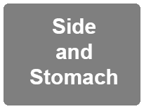 Side and Stomach